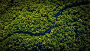 Forêts 100% bio